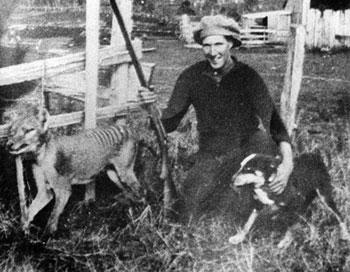 Cacciatore di tilacino